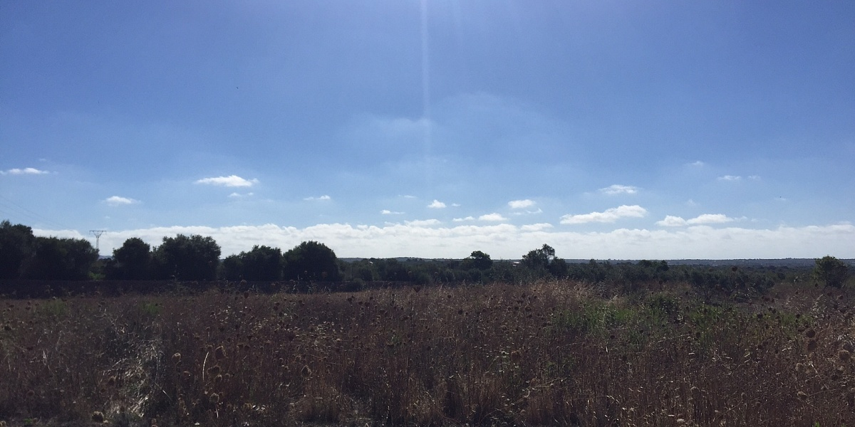 0 bedroom Land for sale in Campos, Mallorca