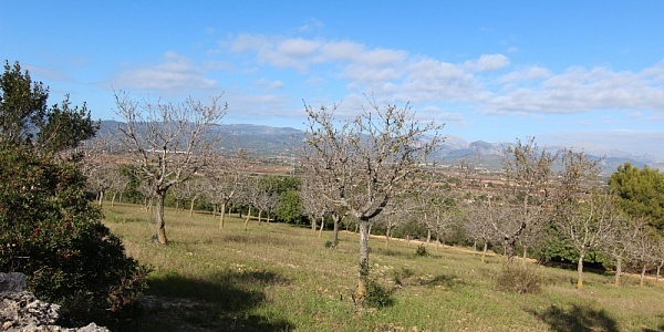 0 bedroom Finca for sale in Santa Eugenia, Mallorca
