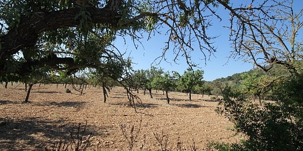 0 bedroom Land for sale in Alaró, Mallorca