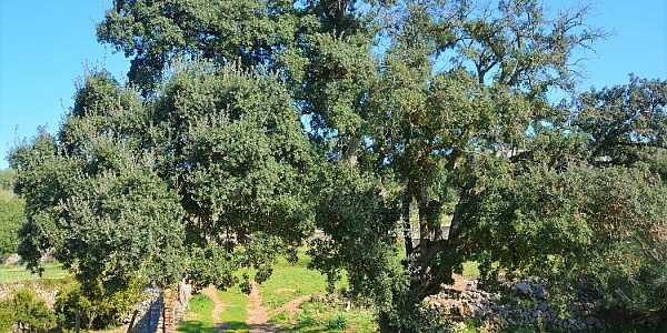 0 bedroom Land for sale in Arta, Mallorca