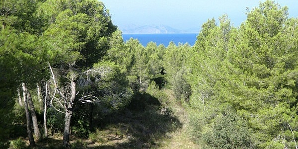 0 bedroom Land for sale in Betlem, Mallorca