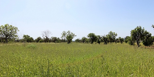 0 bedroom Land for sale in Binissalem, Mallorca