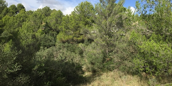 0 bedroom Land for sale in Bunyola, Mallorca