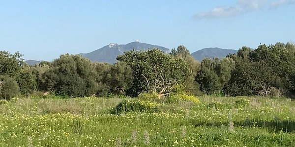 0 bedroom Land for sale in Felanitx, Mallorca
