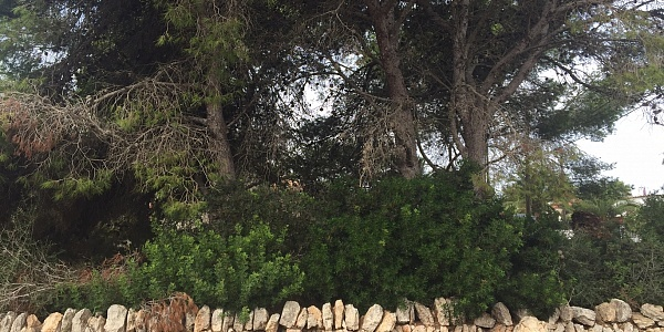 0 bedroom Land for sale in Llombards, Mallorca