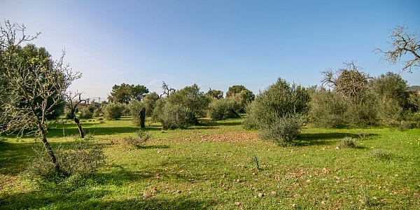 0 bedroom Land for sale in Llucmajor, Mallorca