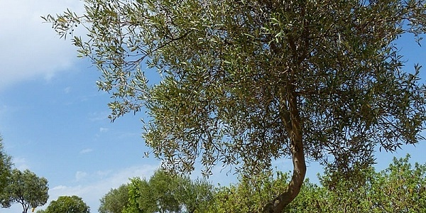 0 bedroom Land for sale in Manacor, Mallorca