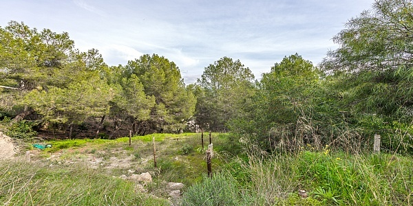 0 bedroom Land for sale in Paguera, Mallorca