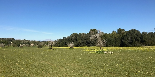 0 bedroom Land for sale in Petra, Mallorca
