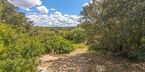0 bedroom Land for sale in Porreres, Mallorca