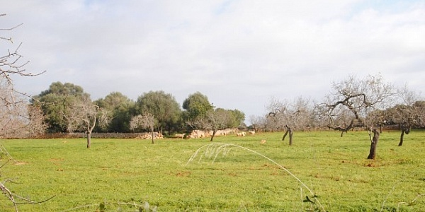 0 bedroom Land for sale in SHorta, Mallorca