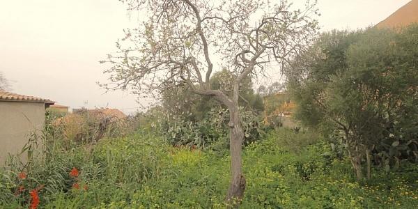 0 bedroom Land for sale in Sa Cabaneta, Mallorca