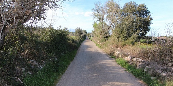 0 bedroom Land for sale in Sencelles, Mallorca
