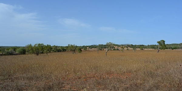 0 bedroom Land for sale in Ses Salines, Mallorca
