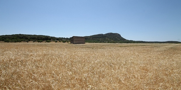 0 bedroom Land for sale in Sineu, Mallorca