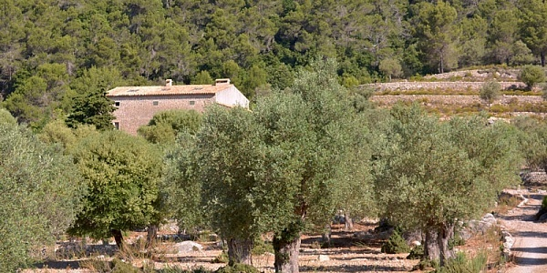 8 bedroom Finca for sale in Pollensa, Mallorca